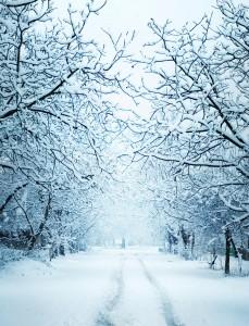 Winter (3)(1)